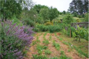 Le jardin collectif de Lauconie: Bienvenue dans mon jardin au naturel @ lauconie à Cornil, près du Battement d'Ailes