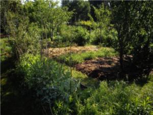Le jardin d'Elisabeth et François : Bienvenue dans mon jardin au naturel @ Ste Fortunade dans le bourg, tourner en direction du centre équestre